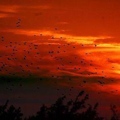 7a.m., starlings are coming Photo by Bihari Zoltán  #tokaj #tokajwineregion #tokaji #visittokaj #tokajhegyalja #tokajiaszú #tokajwine #vineyard #tokajiborok #aszú #ig_magyarorszag #ig_magyarország #hungary_gram #loves_hungary #visithungary #naturelovers #nature @eurotravellers #UNESCO #unescoworldheritage #worldheritage #worldheritagesite