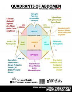 Abdomen Quadrants. Chiropractic