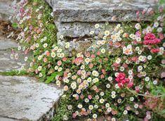 Spanish Dance, Garden Entrance, Entrance Ideas, Natural Garden, Personalized Mugs, Gardening For Beginners, Mind Blown, Decoration, Beautiful Flowers