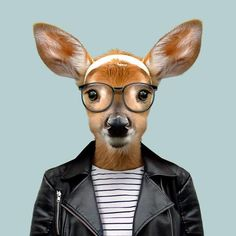 Yago Partal - Photography and Digital Illustration - Zoo Portraits Animals And Pets, Funny Animals, Cute Animals, Animal Heads, Animal Faces, The Zoo, Animal Wallpaper, Hipsters, Funny Animal Pictures