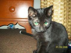 Percius - www.Pet360.com