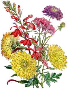 Botanical-Fall Flower Images
