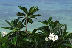 The sweet smell of the Sea in the Philippines, I love it! Romantic Places, Beautiful Places, Flower Places, Uk Visa, Beach Place, Filipina, Ultimate Travel, Places To See, Philippines