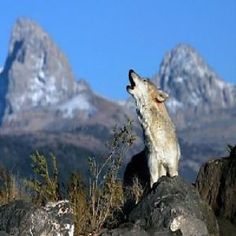 D138 Relaxation Audio Cd Music Inspired By Wolf Song