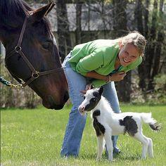 Einstein the tiny horse