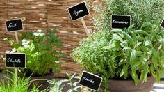 Plantes aromatiques - décorer un balcon