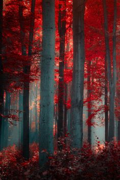 Autumn fall trees forest
