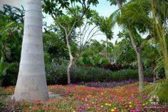 "¡Un mundo de colores! en el ""Jardín Tropical"" de Jardines de México.  Morelos, México. #paisajismo #landscaping  #Turismo #Tourism #Naturaleza #Nature #JardinesDeMéxico.  http://jardinesdemexico.org"