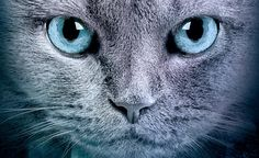 What's your Warrior cat name? | PlayBuzz