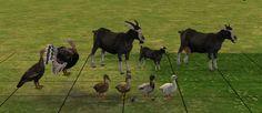 Decorative farm animals