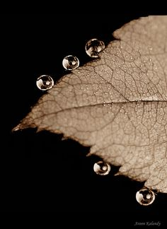 Droplets - Wish Everyone a very happy Sreekrishna Jayanthi by aroon_kalandy, via Flickr