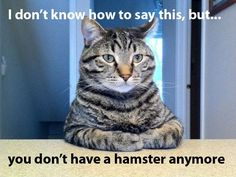 You don't have a hamster anymore - Funny cat sitting seriously saying: I don't know how to say this, but... you don't have a hamster anymore.
