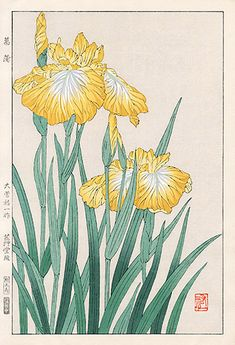 Iris by Yuichi Osuga from Shodo Kawarazaki Spring Flower Japanese Woodblock Prints Japanese Art Styles, Japanese Drawings, Japanese Prints, Botanical Drawings, Botanical Illustration, Botanical Prints, Iris Painting, Japanese Flowers, Japanese Painting