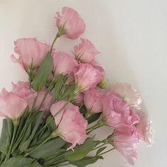My Flower, Beautiful Flowers, Flower Aesthetic, Aesthetic Plants, Nature Aesthetic, Japanese Aesthetic, Korean Aesthetic, Brown Aesthetic, Purple Aesthetic