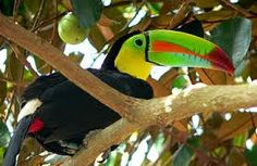 http://costaricaitinerary.com/tour/naturalist-tour-guide.php