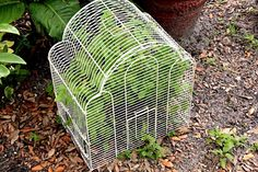A good idea to protect your cats from plants Toxic Plants For Cats, Simple Signs, Poisonous Plants, Catio, Houseplants, Dog Cat, Succulents, Beautiful Pictures, Herbs