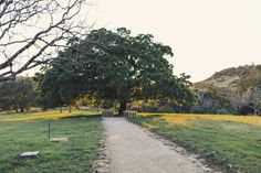 Triple S Ranch Wedding in Napa Valley @Anne-Claire Brun 0125