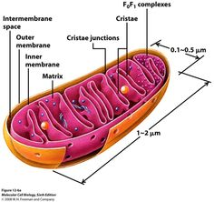 Need Some Energy? - Cells & Organelles