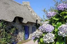 The small town of Concarneau in South Brittany is typical with traditional Breton houses. Most are decorated with famous hydrangeas or hortensias as known locally. back in the aul sod, Northern Ireland hardly a garden without them either. Bretagne was first place seen them since arrived here 2 years ago. Grow everywhere in Bretagne than weeds.