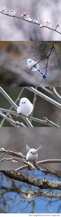 The cutest bird