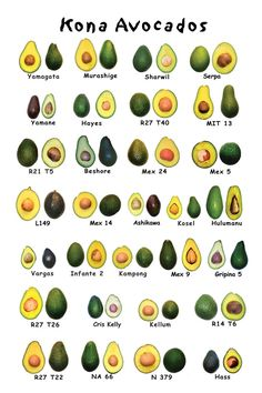 The avocado is a tree native to Central Mexico, classified in the flowering plant family Lauraceae along with cinnamon, camphor and bay laurel. Avocado or alligator pear also refers to the fruit of the tree.