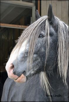 Studio Nina Lindh - Shire Horse - What a beautiful animal.