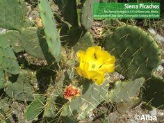 La bella de la flora se presenta día a día en nuestra sierra.