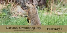 NATIONAL GROUNDHOG DAY - February 2 - Groundhog Day is observed on February 2nd, each year in the United States and Canada. On this day the groundhog awakens from his nap and goes outside to see if he can see his shadow. If he does there will then be six more weeks of winter and he goes back in his den and goes back to sleep. If he is not able to see his shadow, the groundhog remains outside to play and people celebrate believing that spring is just around the corner.