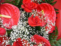 Happy Mother's Day! -  Felice Festa della Mamma! (Luigi Strano) Tags: flowers flores nature fleurs flor blumen bouquet fiori blommor bungabunga maua bloemen blomster bulaklak hoa flors iekler  flori  kvtiny  geles lule virgok blom kukat fior cvijee lilled blomme viragok   ziedi  isawyoufirst  kbetki kuety