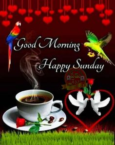Good Morning Life Quotes, Good Morning Love Gif, Good Morning Sunday Images, Good Morning Images Flowers, Good Morning Texts, Morning Wish, Beautiful Morning Messages, Good Morning Messages, Good Morning Greetings
