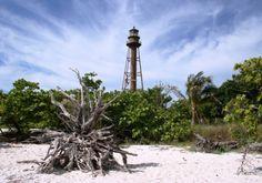 sanibel island | sanibel island sanibel island dunes shells along sanibel island