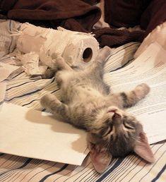 猫画像まとめ~激闘の末に・・・ - もふぬこ戦記