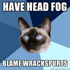 #Chronic #Illness #Cat #disability #health #funny
