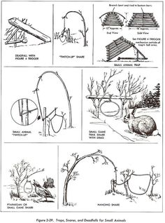 snares and traps- Everyone should know this and about the edible plants (and be able to make a positive ID of those plants if in doubt its best not to use).