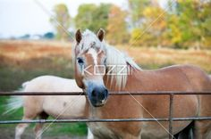view of a horse by fence. - Close up view of a horse by fence
