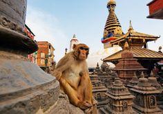 Kathmandu-Affe