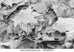 heap of autumn foliage of monochrome tone for an abstract natural background
