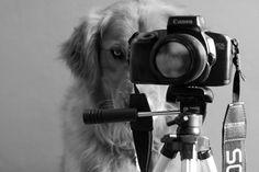 Creative Pet Portraits by Teen Photographer - wave avenue
