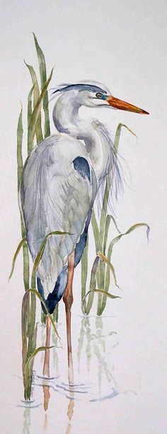 - Great Blue Heron Great Reads from Exceptional Authors at wildbluepr., Fiskehejre - Great Blue Heron Great Reads from Exceptional Authors at wildbluepr. Watercolor Bird, Watercolor Animals, Watercolor Paintings, Watercolors, Tattoo Watercolor, Bird Paintings, Watercolor Artists, Ouvrages D'art, Blue Heron