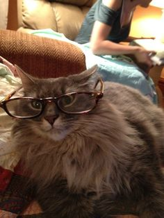 Mom, where did my reading glasses go? | Community Post: 23 Cats Who Demand That You Take A Study Break Right Now