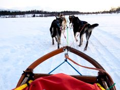 Glamping & Dogsledding at Holmen Husky Lodge in Northern Norway = Amazing Four Corners Monument, Tromso, Arctic Circle, Continents, Dog Pictures, Glamping, Outdoor Gear, Places To See, Norway