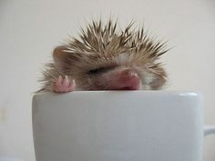 Spiked coffee. This is from the MOST amazing pin board of otters and hedgehogs.