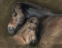 1000 images about horse art on pinterest horse art horse paintings and equine art. Black Bedroom Furniture Sets. Home Design Ideas