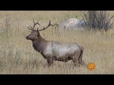 Nature: Rocky Mountain National Park - YouTube