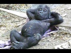 Grappige aap video's - een grappige apen. Compilatie - YouTube