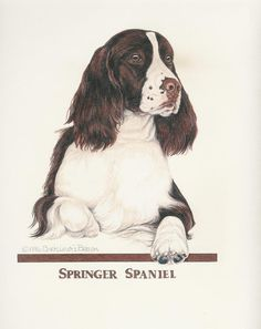 English Springer Spaniel Liver/White Original Art by Chris Lewis Brown - #524 in Collectibles, Animals, Dogs | eBay!