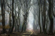"""Spooky - Spooky, the Netherlands.  Check out my profile for many more moody forest photos.   <a href=""""http://facebook.com/martinpodtphotography"""">Facebook</a> 