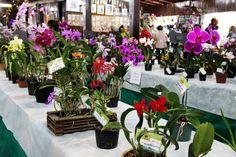 INFORMATIVO GERAL: 2ª Exposição Regional de Orquídeas de Montenegro.
