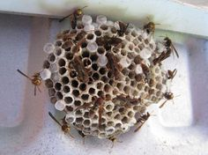 Got wasps? No Raid required! Get rid of stinging wasps and bees naturally with this super simple spray recipe.
