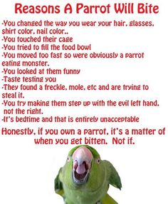 """Having a parrot means you WILL get bitten, not if...but it's """"ok."""""""